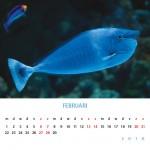 fotokalender 2016